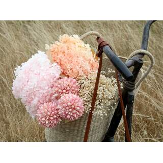 Dried Snowball Flowers Colour: Rose