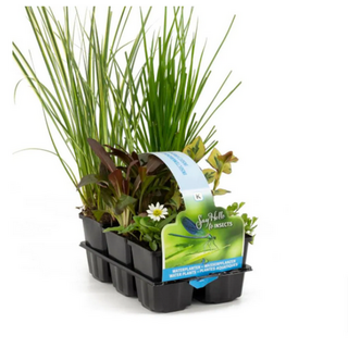 groundcovering mix 6-pack mixed