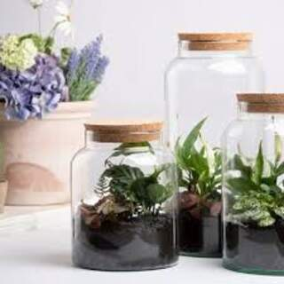 Half open terrarium bottle 7L