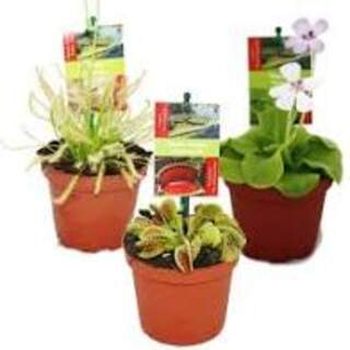Carnivorous plants  mixed