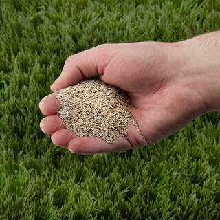 Easy Lawn seed no2 25kg